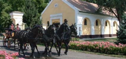 Mezőhegyesi Állami Ménes lótenyésztő és értékesítő Kft. Kocsimúzeuma