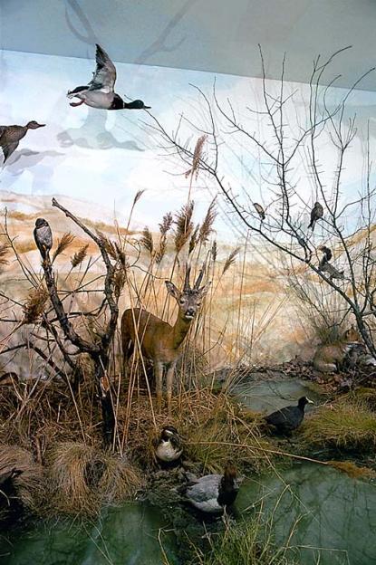 Water diorama