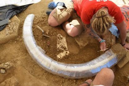 Egy fiatal mamut feldarabolt vázának maradványaira bukkantak Ausztriában