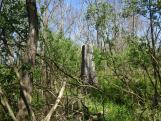 Az emlékmű és a temető elhagyatottan várja a szebb napokat
