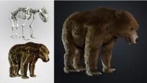 Barlangi medve