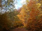Háromhuta ősz