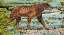 A kardfogú macska (Homotherium latidens) szemfog-leletei