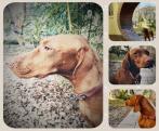 A Kutya éve - Családi délután