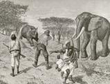 Teleki Sámuel vadállatokkal harcol