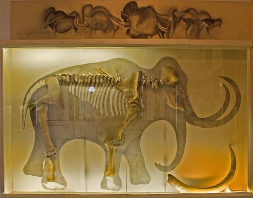 A tolnai táj évezredei az őskortól a honfoglalásig, részlet