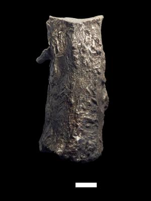 A mai bárdudvarnok hatásában álló (a középkorban Kaposfőinek vagy Szentbenedekinek nevezett) premontrei prépostság harangjának erősen égett fültöredéke