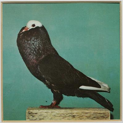 Petra Feriancova, Series Creator – From the Archive of O.Ferianc, New Breeds 1949-1952, 2008